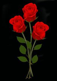 گل رز شماره 2