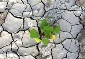 مدیریت منابع آب سطحی با استفاده از سازه های پخش و کنترل سیلاب مطالعه موردی حوضه آبریز هارکله لالی دراستان خوزستان