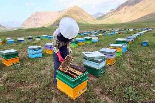 دانلود طرح کارآفرینی پرورش و نگهداری زنبور عسل (با قابلیت ویرایش / فایل Word) تعداد صفحات ۱۷