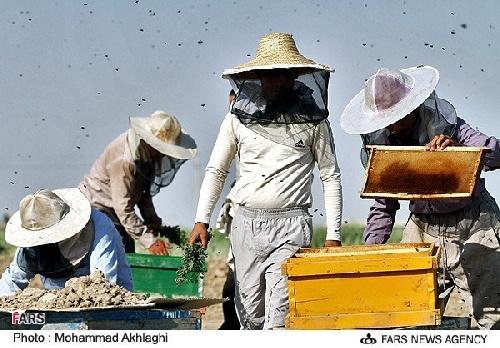 دانلود پرورش زنبور عسل
