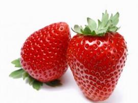 آموزش پرورش توتفرنگی در گلدان
