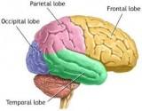 صد واقعیت جالب درباره مغز انسان