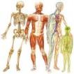 100دانستنی اعجاب آور درباره بدن انسان