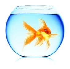به ماهی قرمز دست نزنید