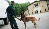 همه چیز درباره سگهای پلیس