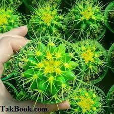 دانلود کتاب آموزش صحیح کاشت بذر کاکتوس در خانه و گلخانه