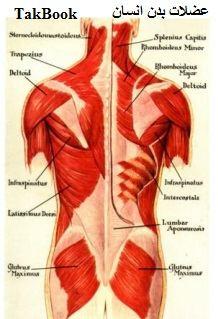 دانلود کتاب عضلات بدن انسان