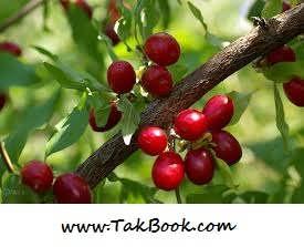 7 گیاه خاصی که کلیه ها را دوست دارند