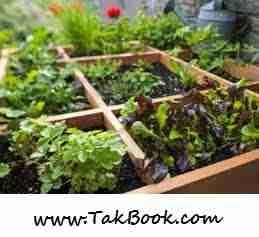 آموزش کاشت 10 سبزی در باغچه خانگی